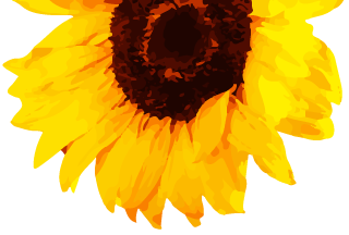 Romanian Sunflower